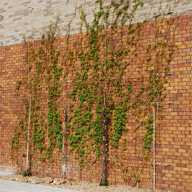 Architecture: vertical gardens green buildings